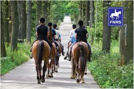 FNRS paard in verkeer